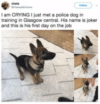 Crying, Joker, and Police: chels  @ChelseaMcFerren  Follow  l am CRYING I just met a police dog in  training in Glasgow central. His name is joker  and this is his first day on the job <p>First day on the job</p>