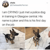 Crying, Joker, and Memes: chels  @ChelseaMcFerren  I am CRYING I just met a police dog  in training in Glasgow central. His  name is joker and this is his first day  on the job WHY AM I CEYING IN THE FLUB RB