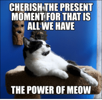 Happy, Power, and Powerful: CHERISHTHE PRESENT  MOMENT FOR THAT IS  ALL WE HAVE  THE POWER OF MEOW The secret to happiness