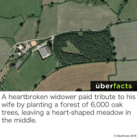 http://mentalfloss.com/article/67040/5-curiously-shaped-forests: Cherry  Rock Form O  uber  facts  A heartbroken widower paid tribute to his  wife by planting a forest of 6,000 oak  trees, leaving a heart-shaped meadow in  the middle.  Uber Facts 2015 http://mentalfloss.com/article/67040/5-curiously-shaped-forests