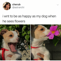 Memes, Flowers, and Happy: cherub  @astrarchi  i wnt to be as happy as my dog when  he sees flowers Post 1200: y the hell arent following @kalesaladanimals yet