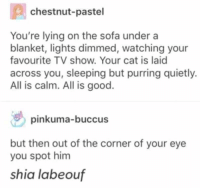 Shia LaBeouf, Good, and Sleeping: chestnut-pastel  You're lying on the sofa under a  blanket, lights dimmed, watching your  favourite TV show. Your cat is laid  across you, sleeping but purring quietly.  All is calm. All is good.  pinkuma-buccus  but then out of the corner of your eye  you spot him  shia labeouf