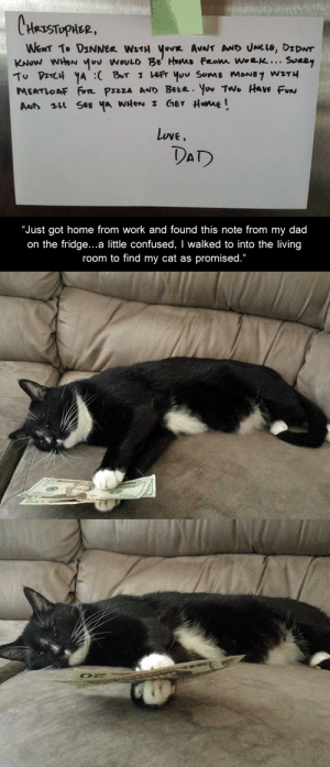 "coloradoqueen:  kingofrunes:  yourshipsaregross:  disgustinganimals:  pizzacatsandboobs:  kaible:  This is one of my favorite posts because that cat's fucking name is fucking meatloaf  Let us just appreciate that this person's dad didn't know when they would be home and so he couldn't plan for them to be able to join the family for dinner, but he knew with no doubts that dear sweet Meatloaf staying in that exact position for hours was an absolute in this scenario. Truly, that cat was named well.  one of my favorite posts on tumblr over the course of 5 fucking years.. clearly i need a life  Meatloaf is a reliable cat and did not steal the money for selfish reasons. A rare friend.  I love Meatloaf. :)  Bless Meatloaf   Reblog Money Meatloaf to get surprise $40 : CHesTuplEL,  Luve,  DAD   ""Just got home from work and found this note from my dad  on the fridge...a little confused, I walked to into the living  room to find my cat as promised."" coloradoqueen:  kingofrunes:  yourshipsaregross:  disgustinganimals:  pizzacatsandboobs:  kaible:  This is one of my favorite posts because that cat's fucking name is fucking meatloaf  Let us just appreciate that this person's dad didn't know when they would be home and so he couldn't plan for them to be able to join the family for dinner, but he knew with no doubts that dear sweet Meatloaf staying in that exact position for hours was an absolute in this scenario. Truly, that cat was named well.  one of my favorite posts on tumblr over the course of 5 fucking years.. clearly i need a life  Meatloaf is a reliable cat and did not steal the money for selfish reasons. A rare friend.  I love Meatloaf. :)  Bless Meatloaf   Reblog Money Meatloaf to get surprise $40"