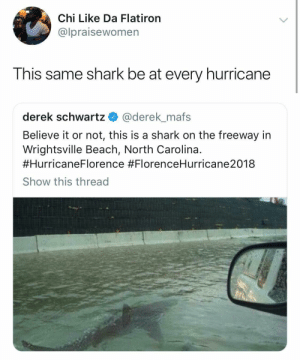 Dank, Memes, and Target: Chi Like Da Flatiron  @lpraisewomen  This same shark be at every hurricane  derek schwartz@derek mafs  Believe it or not, this is a shark on the freeway in  Wrightsville Beach, North Carolina.  #Hurricane 8  Show this thread  Florence Jaws 5 in the making… by jaylen2318 MORE MEMES