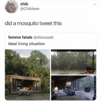 Living, MeIRL, and Mosquito: chib  @Chibleee  did a mosquito tweet this  femme fatale @eliesaaab  Ideal living situation meirl
