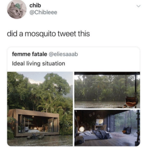 Memes, Living, and Mosquito: chib  @Chibleee  did a mosquito tweet this  femme fatale @eliesaaab  Ideal living situation Were onto you via /r/memes https://ift.tt/2zUgu8i