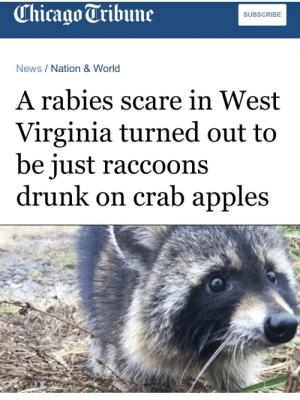 Roses are red, churches have chapels,: Chicago Tribune  SUBSCRIBE  News/Nation & World  A rabies scare in West  Virginia turned out to  be iust raccoons  drunk on crab apples Roses are red, churches have chapels,