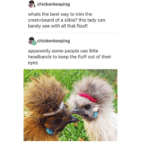 Apparently, Beard, and Ironic: chickenkeeping  whats the best way to trim the  crest+beard of a silkie? this lady can  barely see with all that floof!  chickenkeeping  apparently some people use little  headbands to keep the fluff out of their  eyes Ugh okay that didn't work the way I wanted it too so I guess I'm back I'm sorry I'm just so empty I'm just sorry so sorry I shouldn't have done that I regret it I didn't even want to die that's the fucked up thing ? Do you get what I mean ??? ugh I wish I was good with words but I'm not unfortunately I don't know anymore again I'm sorry let's just forget about all that yeah ?