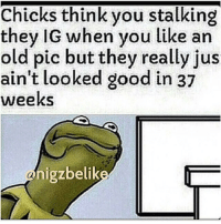 RT @SnitchingKermit:: Chicks think you stalking  they IG when you like an  old pic but they really jus  ain't looked good in 37  weeks  igzbelik  an RT @SnitchingKermit: