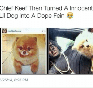 Chief Keef, Dope, and Target: Chief Keef Then Turned A Innocent  Lil  Dog Into A Dope Fein  chieffkeeffsoss  /25/14, 8:28 PM nourrice:  im losing my mind