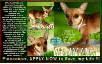 Being Alone, Andrew Bogut, and Cats: Chihuahua LOVERS, little  Cappuccino is desperately  wishing for YOU to APPLY with  rescues NOW to Save his Life!!!  FOR A New Family to Know:  Cappuccino is an  AFFECTIONATE, PLAYFUL  MELLOW, & sometimes anxious  dog. your typical Chihuahua. He  is an indoor pup, housebroken,  uses wee-pad, well-behaved &  walks wonderfully on leash. Little  Cap also suffers from seizures  which need to be controlled with  inexpensive medications. The  Chihuahua he is, he is very  nervous at the shelter &  therefore ended up  ON THE NYC KILL LIST!!!  PLEASE, PLEASE, give this little  man a chance, APPLY NOW to  save his life. Adorable Cap DIES  at the Manhattan, NY ACC  UNLESS RESERVED, FOSTERED,  ADOPTED?RESCUED, RIGHT  NOW!!! Just DO IT!  Cappucino 31285  PLAYFUL  AfFECTIONATE  ON the  YC ill List  is 5 yrs young  Please, don's  let them  kill me !!!  Pleeeease, APPLY NOW to Save my Life!!! ***** To Be KILLED 6/18/2018 in NYC *****  Chihuahua LOVERS, TINY 5 lb, YOUNG little Cappuccino is desperately wishing for YOU to APPLY with rescues NOW to Save his Life!!! FOR A New Family to Know: Cappuccino is an AFFECTIONATE, PLAYFUL, MELLOW, INDEPENDENT & sometimes anxious dog, your typical Chihuahua. He is an indoor pup, housebroken, uses wee-pad, well-behaved & walks wonderfully on leash. Little Cap also suffers from seizures which need to be controlled with inexpensive medications. The Chihuahua he is, he is very nervous at the shelter & therefore ended up ON THE NYC KILL LIST!!! PLEASE, PLEASE, give this little man a chance, APPLY NOW to save his life. Adorable Cap DIES at the Manhattan, NY ACC UNLESS ✔RESERVED✔FOSTERED✔ADOPTED✔RESCUED✔RIGHT NOW!!! Just DO IT!!!   VOLUNTEER Georgia Richmond WRITES:   I briefly met Cappucino in his den last night and he was very eager to interact and seemed like a happy wee chappie but due to his reported behavior issues I didn't open the door for pics as I'd definitely have had to hold him in place to get anything 