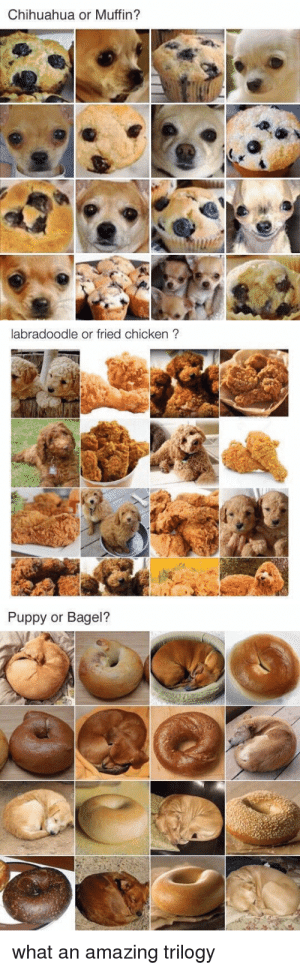 25 Best Labradoodle Or Fried Chicken Memes Puppy Or Bagel