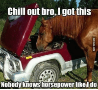 i got this: Chill out I got this  bro, Nobody knows horsepower likel do