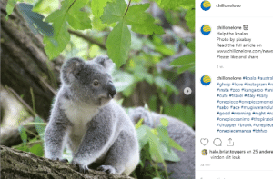 Cute, Halo, and Instagram: chillonelove  chillonelove  Help the koalas  Photo by pixabay  Read the full article on  www.chillonelove.com/news  Please like and share  1 w.  chillonelove #koala #austral  #ghvip #love #instagram #n  #insta #z00 #kangaroo #ani  #cute #travel #italy #sanji  #onepiece #onepiecememei  #sabo #ace #mugiwaranolut  #good #morning #night #na  #onepieceanime #thepiratek  #chopper #brook #onepiece  #onepiecemanga #bhfyp  halo.briar.toygers en 25 andere  vinden dit leuk  24 ME Koala
