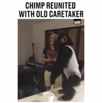 Memes, Bible, and Old: CHIMP REUNITED  WITH OLD CARETAKER  LAD  BIBLE ThatsWhatsUp