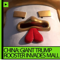 CHINA: GIANT TRUMP  ROOSTER INVADES MALL the pinchy fingers