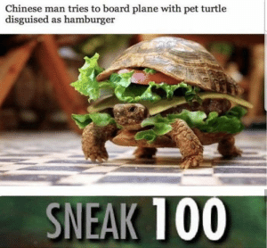 How did he get he get the ingredients in lmao: Chinese man tries to board plane with pet turtle  disguised as hamburger  SNEAK 100 How did he get he get the ingredients in lmao
