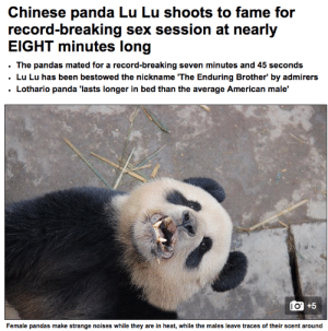 Good for You, News, and Sex: Chinese panda Lu Lu shoots to fame for  record-breaking sex session at nearly  EIGHT minutes long  . The pandas mated for a record-breaking seven minutes and 45 seconds  . Lu Lu has been bestowed the nickname 'The Enduring Brother' by admirers  Lothario panda 'lasts longer in bed than the average American male'   l O  Female pandas make strange noises while they are in heat, while the males leave traces of their scent around buzzfeed:  yrbff:welp (x)  Good for you, Lu Lu. Good for you.