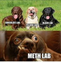 Barking Bad: CHOCOLATE LAB  BLACK LAB  YELLOW LAB  METH LAB Barking Bad