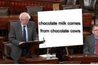 Chocolate, Truth, and Com: chocolate milk comes  from chocolate cows  ADDTEXT.COM dont deny the truth