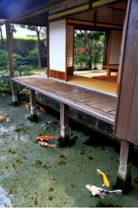 chokkilissa-nahollos:  lemongrabmypenis:   fallenforbands:  imperfect-ions:  kaijuuwrx:  That water is so fucking clear…  type of place I wanna live  I'd be the idiot who forgets the water is there and falls off there porch everyday   Probably useless info but,  the water is super clear because of the carp!!!   that is wonderful and useful info; what good scaly boys, they do their job so well : chokkilissa-nahollos:  lemongrabmypenis:   fallenforbands:  imperfect-ions:  kaijuuwrx:  That water is so fucking clear…  type of place I wanna live  I'd be the idiot who forgets the water is there and falls off there porch everyday   Probably useless info but,  the water is super clear because of the carp!!!   that is wonderful and useful info; what good scaly boys, they do their job so well