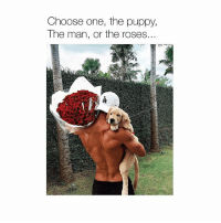 Choose One, Memes, and Puppy: Choose one, the puppy,  The man, or the roses... Answers in the comments 👇🏼 vote puppy roses fitnessmotivation muscle