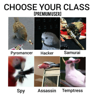 Samurai, Tumblr, and Blog: CHOOSE YOUR CLASS  [PREMIUMUSER]  2  Pyromancer Hacker  Samurai  Spy  Assassin Temptress jkb-whatever:CHOOSE YOUR CLASS IN THE TAGS
