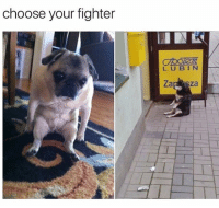 Memes, Teen Mom, and Time: choose your fighter  BBTER  LUBIN goin pug every time @gary_from_teen_mom