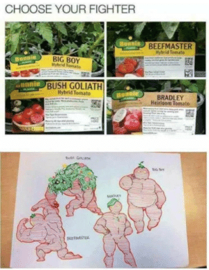 Choose Your Fighter by coffeeblossom MORE MEMES: CHOOSE YOUR FIGHTER  BEEFMASTER  Hybrid Tomato  BIG BOY  Ilybrid Tomato  Bunnie  unnie  BUSH GOLIATH  Hybrid Tomato  BRADLEY  Heirloom Tomato  BUSH GOLIATH  BIG S Choose Your Fighter by coffeeblossom MORE MEMES