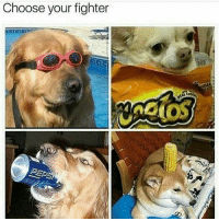 """Choose your fighter I think the funniest thing is that meme of spongebob that is like Famous person: *posts something* And then it's the distorted picture of spongebob saying """"PLEASE COME TO BRAZIL"""" can someone DM me it I can't find it but also I looked at Tammy Lauren's recent and someone said that and I cracked up"""