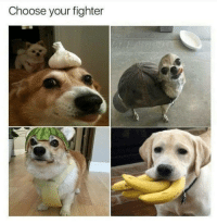 Lazy, Memes, and The Middle: Choose your fighter Look, a dump of memes and other crap I did not make.  With cat tax in the middle because Im lazy and didnt fix it.