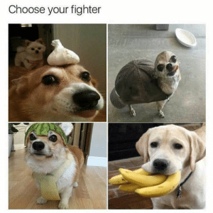 Top 44 Hilarious Dogs with Captions to Brighten Your Day - Viralapk.com: Choose your fighter Top 44 Hilarious Dogs with Captions to Brighten Your Day - Viralapk.com