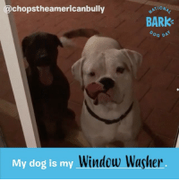 What does your dog mean to you? Let us know in the comments and we may feature your pup on our social channels on NationalDogDay! DogPeopleGetIt @wafflesleggo @mister_griff @chopstheamericanbully @stelladigs @deanthebasset @wheelertheweim @funnyforfido: chopstheamericanbully  ATION4  BARK  OG DA  My dog is my- What does your dog mean to you? Let us know in the comments and we may feature your pup on our social channels on NationalDogDay! DogPeopleGetIt @wafflesleggo @mister_griff @chopstheamericanbully @stelladigs @deanthebasset @wheelertheweim @funnyforfido