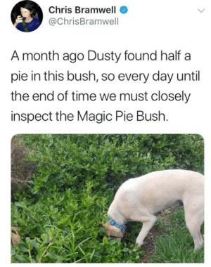Target, Tumblr, and Blog: Chris Bramwell  @ChrisBramwell  A month ago Dusty found half a  pie in this bush, so every day until  the end of time we must closely  inspect the Magic Pie Bush. smokeysrebloggingthings: Dream on lil doggie