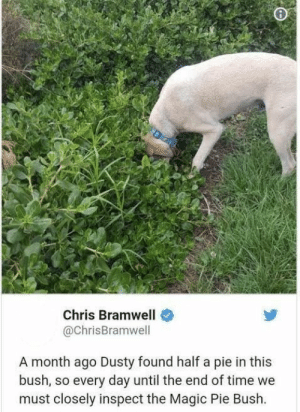 """Dusty and the Magic Pie Bush"" sounds like an adorable children's book about dogs, doesn't it? #Memes #Dogs #Animals #Cute: Chris Bramwell  @ChrisBramwell  A month ago Dusty found half a pie in this  bush, so every day until the end of time we  must closely inspect the Magic Pie Bush. ""Dusty and the Magic Pie Bush"" sounds like an adorable children's book about dogs, doesn't it? #Memes #Dogs #Animals #Cute"
