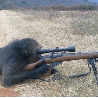 History, Iraq, and Chris Kyle: Chris Kyle, the most lethal sniper in U.S. history, prepares a shot at an insurgent. (Iraq, 2002)