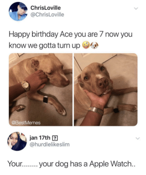 Apple, Apple Watch, and Birthday: ChrisLoville  @ChrisLoville  Happy birthday Ace you are 7 now you  know we gotta turn up  @BestMemes  jan 17th ?  @hurdlelikeslim  Your.your dog has a Apple Watch Turn up by Bbkingml13 MORE MEMES