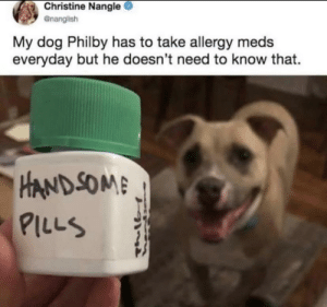 Pitbulls are the best: Christine Nangle  enanglish  My dog Philby has to take allergy meds  everyday but he doesn't need to know that.  HAND SOME  PILLS Pitbulls are the best
