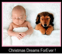 . Christmas Dreamers !  For You and Your Best Buddy …  May the Spirit of Christmas be in Your Hearts .. All Year Long !  Merry Christmas from Your Friends @ Doggy GOO.: Christmas Dreams ForEver . Christmas Dreamers !  For You and Your Best Buddy …  May the Spirit of Christmas be in Your Hearts .. All Year Long !  Merry Christmas from Your Friends @ Doggy GOO.