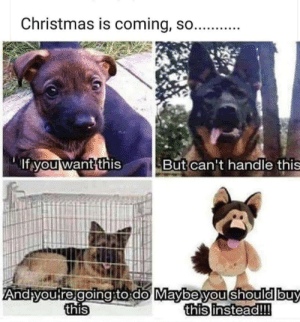 Good reminder!: Christmas is coming, so...  If you want this  But can't handle this  Andyou reigoingto do Maybeyou should buy  this instead!!!  this Good reminder!