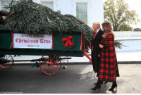 Christmas, Memes, and White House: Christmas Tree  201 8  AP Photo/Manuel Balce Ceneta President @realdonaldtrump and @flotus receive the White House Christmas Tree. The North Carolina-grown 19 1-2-foot-tall Fraser Fir will be displayed in the Blue Room of the White House.