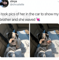 Memes, Amazing, and 🤖: chrys  @chrustelle  i  took pics of her in the car to show my  brother  and she waved Amazing