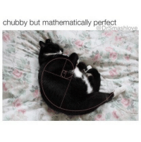 """People: """"HAHAHA MY CAT CINDY IS SO CHUBBS LOL LIKE WHAT A CHUBSTER SHE DOESN'T EVEN PLAY SHE JUST EATS OL CHUBBADUBDUB LOLOL."""" Also People: *overfills bowl with food* """"YASSSS CINDY YASSSS EAT BABY MAKE MOMMY HAPPY EAT IT ALL YOU GOOD GIRL WHO'S A GOOD GIRL OH TWO MORE BOWLS! TWO! MY BABY'S HUNGRY YOU GOOD GIRL SUCH A GOOOOOOOD GOOOOOOD GIRL."""" 😂😂😂: chubby but mathematically perfect  @DrSmashlove People: """"HAHAHA MY CAT CINDY IS SO CHUBBS LOL LIKE WHAT A CHUBSTER SHE DOESN'T EVEN PLAY SHE JUST EATS OL CHUBBADUBDUB LOLOL."""" Also People: *overfills bowl with food* """"YASSSS CINDY YASSSS EAT BABY MAKE MOMMY HAPPY EAT IT ALL YOU GOOD GIRL WHO'S A GOOD GIRL OH TWO MORE BOWLS! TWO! MY BABY'S HUNGRY YOU GOOD GIRL SUCH A GOOOOOOOD GOOOOOOD GIRL."""" 😂😂😂"""