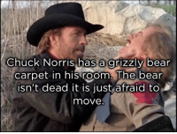 Chuck Norris has a grizzly bear  carpet in his room. The bear  isn't dead it is ust afraid to  move