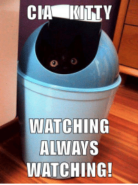 all kitties were trained by the c.i.a .   fact  !   x: CIA KITTY  WATCHING  ALWAYS  WATCHING! all kitties were trained by the c.i.a .   fact  !   x