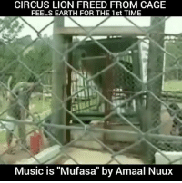 """Beautiful, Memes, and Music: CIRCUS LION FREED FROM CAGE  FEELS EARTH FOR THE 1st TIME  Music is """"Mufasa"""" by Amaal Nuux Beautiful post by @4biddenknowledge - Music is Mufasa by @amaalnuux Circus Lion Freed From Cage Feels Earth Beneath His Paws For The First Time. Shared this by the Rancho dos Gnomos Santuário in Brazil shows the thrilling moment a lion named Will experiences, for the first time, the feeling of soil and grass beneath his feet. Prior to being rescued and taken to the sanctuary, Will had been forced to perform with a traveling circus. For 13 long years, the lion had been confined to a cramped cage and denied any semblance of a normal existence. Within seconds of his release, Will can be seen eagerly running his paws through the soft soil — tragically, a foreign material for a creature who, up until then, had known only cold metal floors. This scene, filmed in 2006 though released this week to the public, was only the beginning. In 2011, Will passed away of old age, but not before finally learning what it meant to be a lion. """"He had five years of tranquility before he died. Here he had the opportunity to interact with other lions. He loved to lie in grass and look at the sky,"""" sanctuary founder Marcos Pompeo told The Dodo. """"He was a very happy lion."""" Music is Mufasa by @amaalnuux. Available Everywhere. @PantheonEliteRecords 4biddenknowledge standup911 bethechange"""