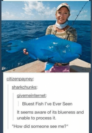 "Funny, Fish, and Image: citizenpayney  sharkchunks:  givemeinternet:  Bluest Fish I've Ever Seen  It seems aware of its blueness and  unable to process it.  ""How did someone see me?"" Funny Image Dump Part 5"