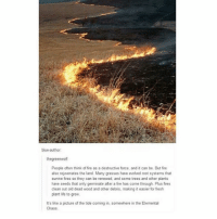 Fire, Fresh, and Ironic: CK  blue-author  thegreenwolf  People often think of fire as a destructive force, and it can be. But fire  also rejuvenates the land Many grasses have evolved root systems that  survive fires so they can be renewed, and some trees and other plants  have seeds that only germinate after a fire has come through. Plus fires  clean out old dead wood and other debris, making it easier for fresh  plant life to grow  It's like a picture of the tide coming in, somewhere in the Elemental  Chaos