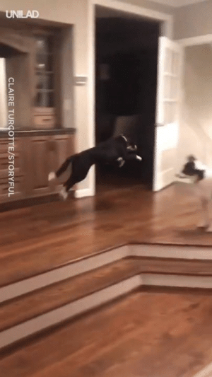 "Dank, How To, and 🤖: CLAIRE TURCOTTE/STORYFUL ""So, my dog figured out how to jump... now he won't stop"" 😂😂"