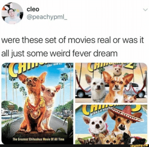 : cleo  @peachypml_  were these set of movies real or was it  all just some weird fever dream  AMON 330  IVER  WILLS  VIVA LA FIES  The Greatest Chihuahua Movie Of All Time  ifunny.c